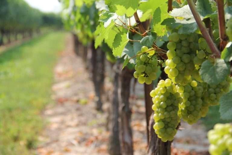 Limburgse wijn proeven